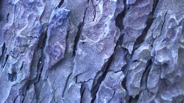 Mikro brok stromu