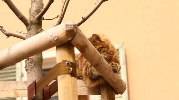 Closeup of Cat at home