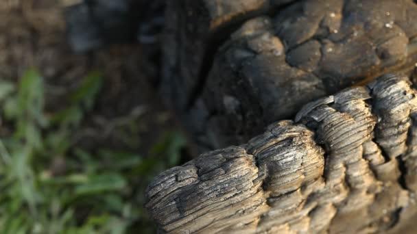 Closeup shot of Black coal