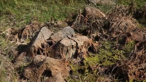 Surové kameny zblízka