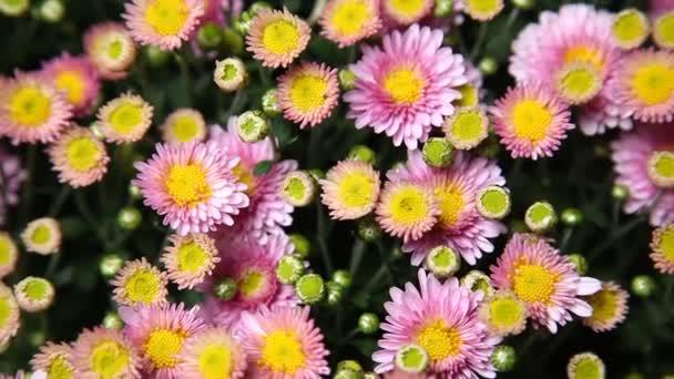 Mikrosnímek květin