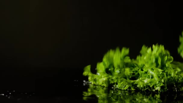 Friesian Parsley with Water Splashing on Black Background, Slow Motion 4K