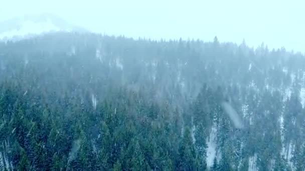 Zimní sníh horský les počasí období zmrazené