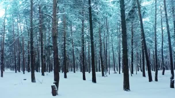 Hóerdő tél természet esik fagyasztott mágikus köd köd park