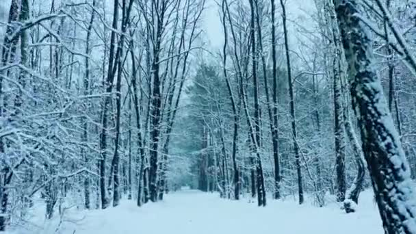 Sněžný les zima příroda studený podzim pohyb krásný stálý výstřel