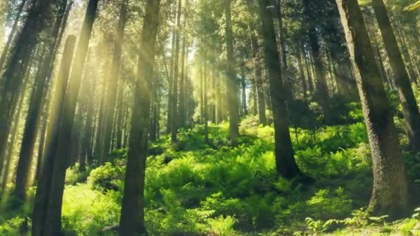 Nature forest sun morning flower mystery beautiful floral