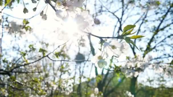 Květiny kvetoucí příroda park město jaro