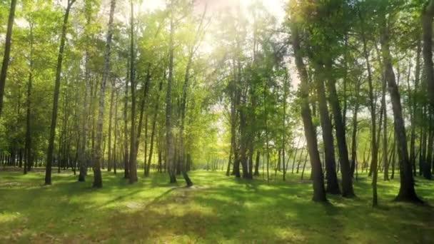 Zelený les slunce magické paprsky listy list větev park