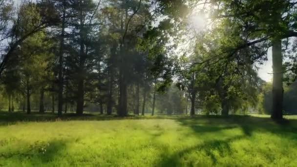 Zöld erdő nap mágikus sugarak levél levelek ág park