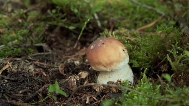Ein Mann schneidet einen Pilz im Gras. Nahaufnahme