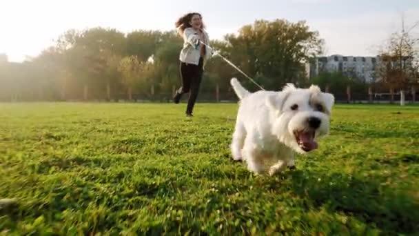 Jack Russell Terrier Hund läuft fröhlich zu einem Mädchen durch das Gras im Naturpark, Zeitlupe V3
