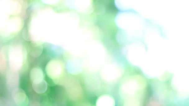 HD Footage of nature green bokeh from tree