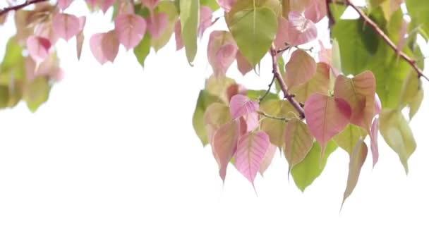 zelené listy na bílém pozadí