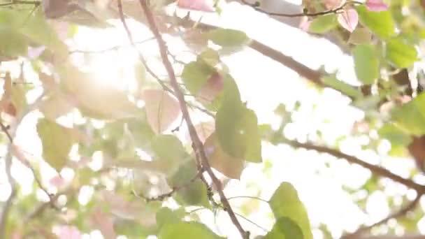 HD felvételeket a természetes zöld levél, a napfény, a természetben