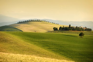 Rolling hills in summer. Val d'Orcia, Tuscany stock vector