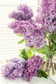Rami di fioritura viola lilla syringa