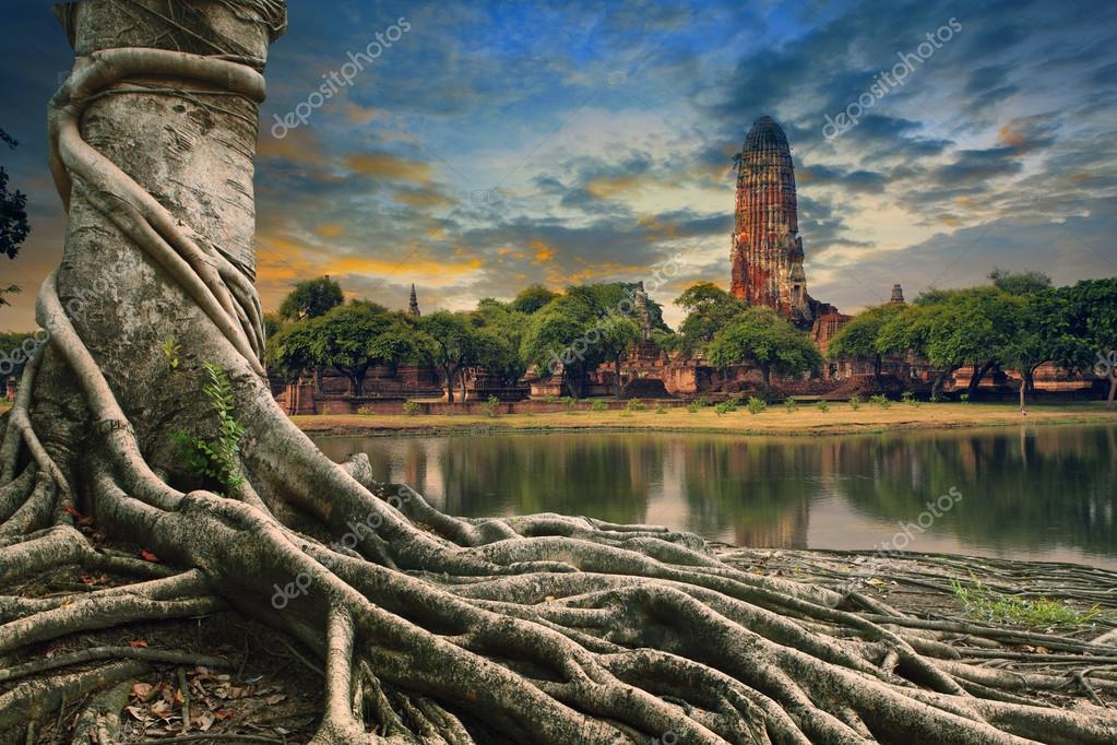 big root of banyan tree land scape of ancient and old  pagoda in