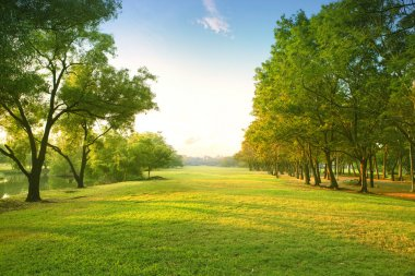 Beautiful morning light in public park with green grass field and green fresh tree plant perspective to copy space for multipurpose stock vector