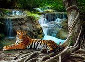 Indočína tygr ležící s odpočinkem pod banyantree proti bea