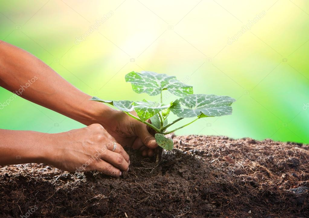 Conceptual of hand planting tree seed on dirty soil against beau
