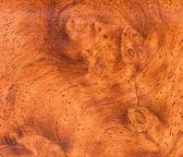 Fotografie Hintergrund und Textur des Holzes Makro Ormosia
