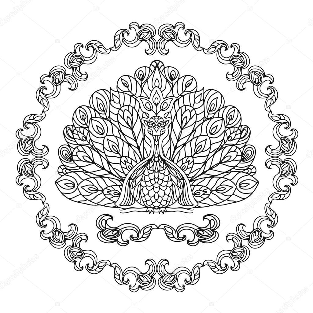 peacock zentangle coloring page isolated u2014 stock photo nuarevik