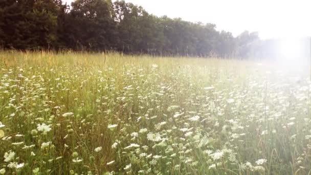 Réti fű és a vadvirágok