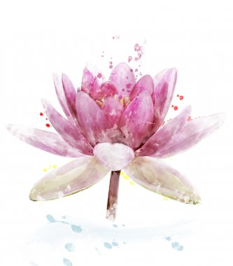 Watercolor Image Of Pink Waterlily Flower