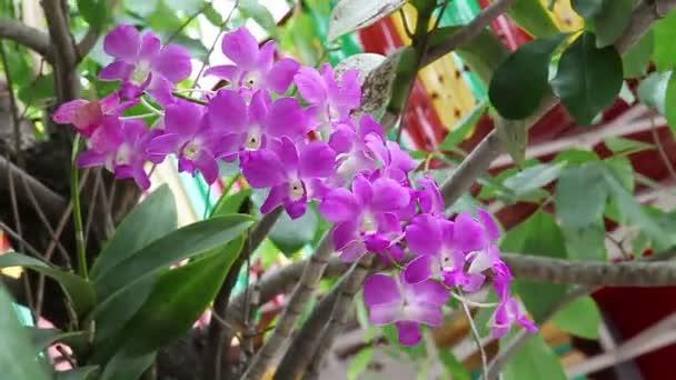 Lila vagy lila rózsaszín orchidea virág, Hd