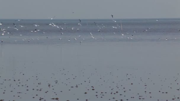 Crowd of seagull flying in the sea