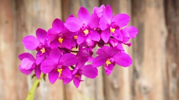 Fialové nebo purpurové růžová orchidej květina, Hd