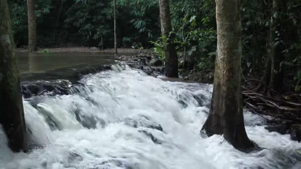 lesní vodopád na národním parkem a strom uprostřed, zblízka