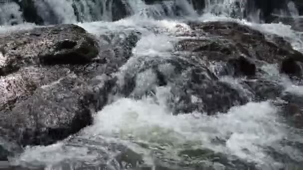 forest waterfall at National Park and rock, closeup view shot