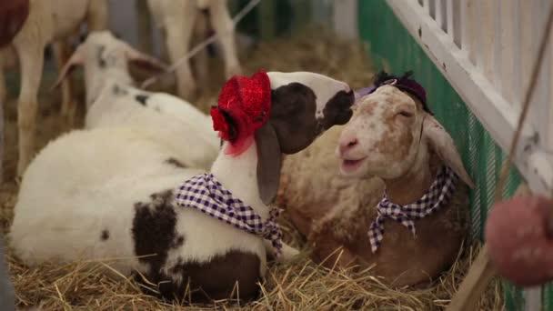 koza oblékání fantazie na sobě klobouk, kravatu a sit relaxovat na slámě
