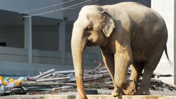 Ázsiai elefánt iszik víz-ban építkezés