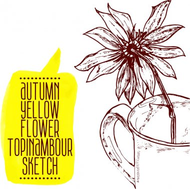 Flower Jerusalem artichoke