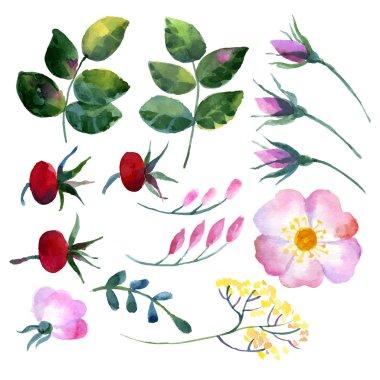 Set of watercolor elements rosehip