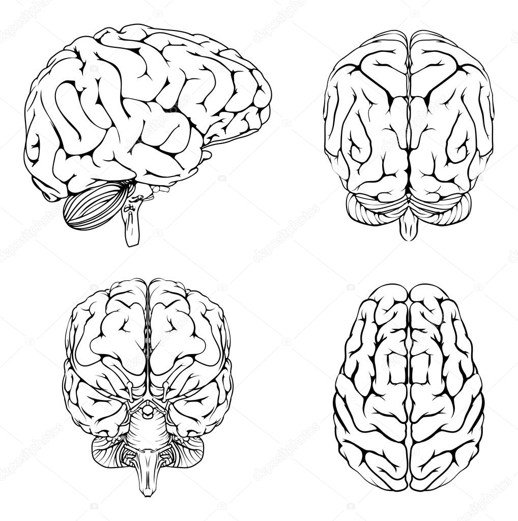 brain from top side front and back � stock vector