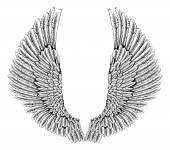 Fotografie Orel nebo anděl křídla