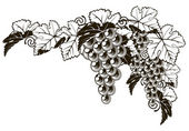 Photo Grapes vintage style design