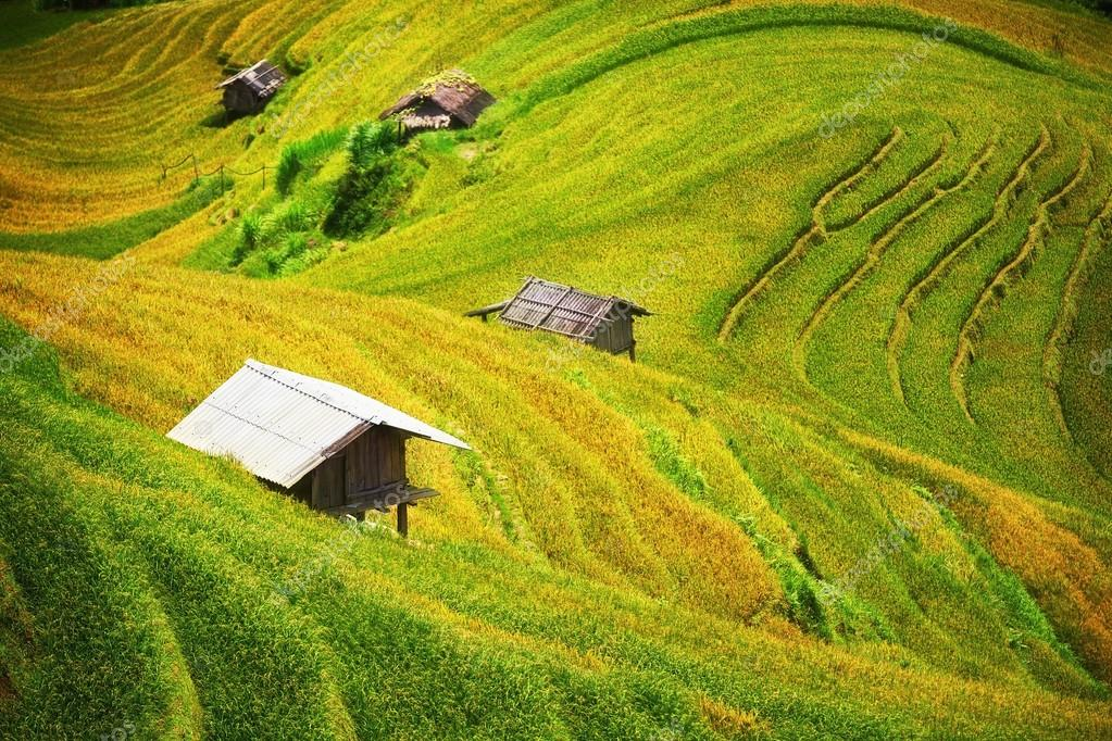 Rice fields on terraced of Mu Cang Chai, YenBai