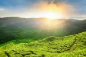 Fotografia Punto di vista sulla cima di cameron Highlands