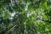 Colpo basso punto di vista degli alberi