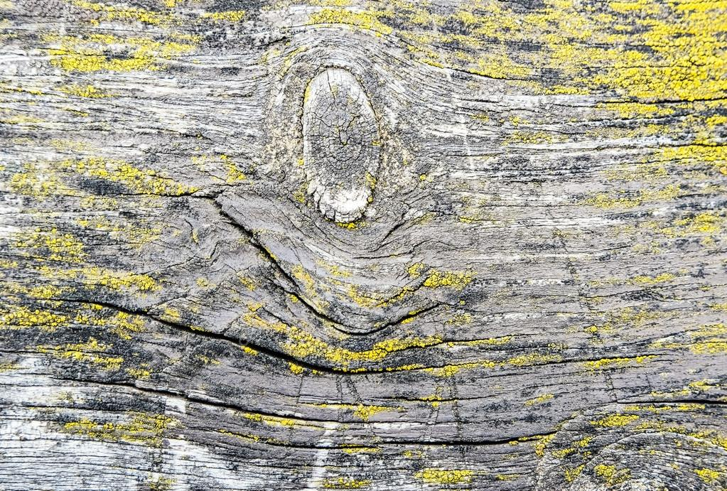 Nature wood texture