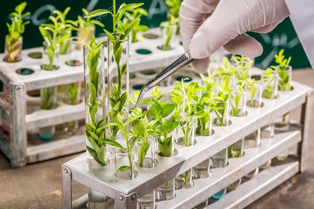 Resultado de imagem para melhoramento de plantas