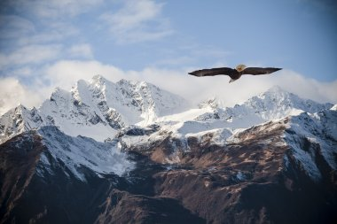 Alaskan mountains with flying eagle.