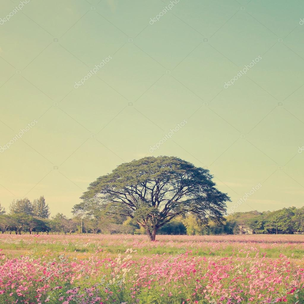 Beautiful tree in colorful field with retro filter effect stock vector