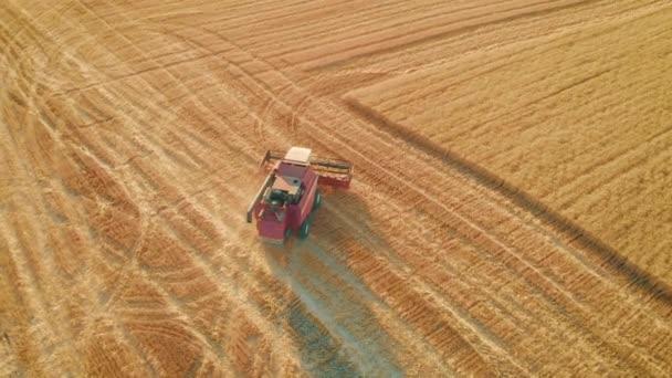 A légi felvétel vörös aratógépe terepen dolgozik. Kombinálja a betakarító mezőgazdasági gép gyűjtése arany érett búza a területen. Búza betakarítása nyáron.