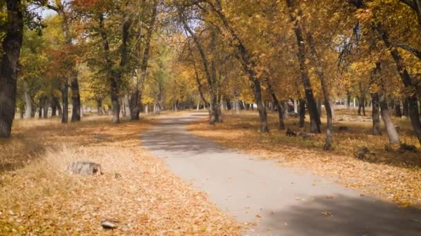 Krásné barevné listí leží na silnici v podzimním parku.