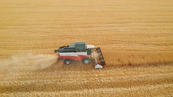 Letecký pohled červený sklízeč pracuje v terénu. Kombinovat sklízecí zemědělský stroj sbírající zlatou zralou pšenici na poli. Sklizeň pšenice v létě.